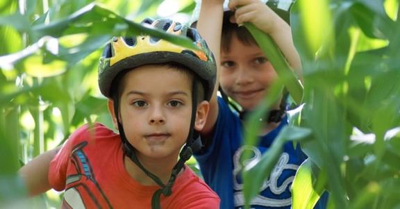 Jongens mountainbiken in een maisveld